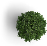 Ios & Android Mobile App Developer Singapore - Plants Top View Png, Transparent Png