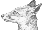 Fox Eyes Png Clipart - Pencil Line Drawing Of Fox, Transparent Png