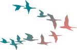 Free Png Download Colorful Flying Birds Png Images - Colorful Flying Birds Png, Transparent Png