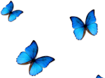 Kisspng Butterfly Blue Phengaris Alcon Blue Butterfly - Butterfly Png For Editing, Transparent Png