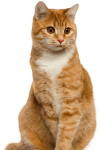 Pet Me With Your Eyes Cat, HD Png Download