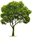 Elm Tree, Photoshop Design, Tree Photoshop, Photoshop - Small Tree, HD Png Download