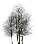 Tree Png Black And White - Multiple Trees Drawings, Transparent Png