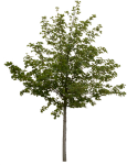 Free Photoshop Tree Cut Out, HD Png Download