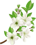 Royalty-free Computer Icons Flower - White Flower Vector Png, Transparent Png