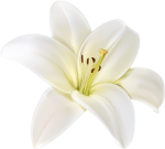 Doodle Png, Rose Doodle, White Flower Png, White Flowers, - White Flower, Transparent Png