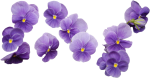 64 Images About Flower Png On We Heart It - Purple Flower Bouquet Png, Transparent Png