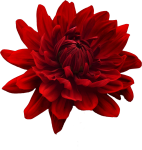 Flower Png Tumblr Flowers - Flower Red E Blue Png, Transparent Png