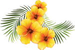 Yellow Hibiscus Flower Vector Royalty Free Download - Tropical Flowers Transparent Background, HD Png Download