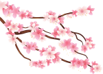 Flower Tree Png - Transparent Background Cherry Blossom Png, Png Download
