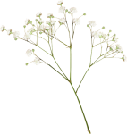 #plants #flower #white #aesthetic #png #editpng, Transparent Png