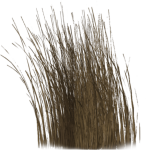 Dry Grass Png - Long Dry Grass Png, Transparent Png