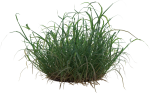 Tuft Of Grass Png, Transparent Png