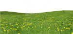 Free Png Download Grass Download Png Png Images Background - Grass Field Flower Png, Transparent Png