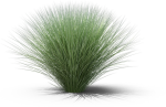 Sweet Grass, HD Png Download