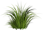 Solved The Material - Transparent Background Cartoon Grass Png, Png Download
