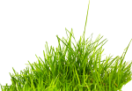 Grass Png Image, Green Grass Png Picture - Ghash Png, Transparent Png