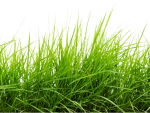 Drawn Lawn Grass Plant - Line Of Grass With Transparent Background, HD Png Download
