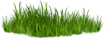 Clip Art Images Of Grasses Png The Ⓒ - Grass Png, Transparent Png
