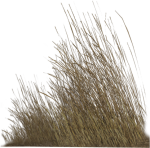 Dry Grass Png Hd , Png Download, Transparent Png