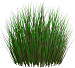 Grass Png Image, Green Grass Png Picture - Unity Grass Texture Png, Transparent Png