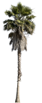 Cutout Trees - Cut Out Palm Tree, HD Png Download