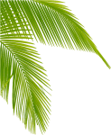 Download Transparent Palm Tree Leaves Png Clipart Leaf - Palm Tree Leaf Png, Png Download