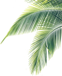 Transparent Palm Branches Clipart - Palm Tree Leaf Png, Png Download