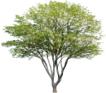 Garden Drawing, Plant Drawing, Tree Plan Png, Tree - Arboles Png Para Photoshop, Transparent Png