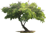 Tree Plan Png, 3d Tree, Plant Images, Plant Illustration, - Tree With White Background, Transparent Png