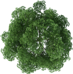 Rendering Top Tree View Download Free Image Clipart - Plan Png Trees For Photoshop, Transparent Png