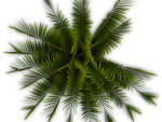 Palm Tree Clipart Top View - Top View Tree Png, Transparent Png