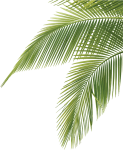 Palm Tree Leaves - Palm Tree Leaves Png, Transparent Png