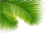 Palm Tree Leaf Png Clip Art Escobar Cleaning Services, Transparent Png