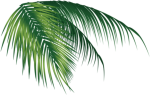 Coconut Leaves Png Images Vectors And Psd Files Tree - Coconut Png, Transparent Png