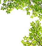 Feuille Arbre Png - Tree Branches With Leaves Clipart, Transparent Png