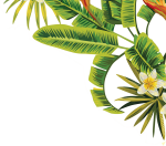 Go To Image - Tropical Palm Leaves Png, Transparent Png