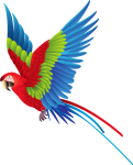 Colourful Parrot Png Clipart - Colorful Fly Bird Png, Transparent Png