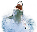 Sharks Sticker - Shark Jumping Out Of Water Png, Transparent Png