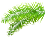 Leaves Clipart - Transparent Palm Leaves Png, Png Download