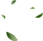 Blowing Leaves Png, Transparent Png
