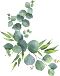 #branch #leaves #florals #branches #zweig #watercolor - Eucalyptus Clipart, HD Png Download