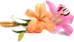 Wedding Flowers Png - Peach Wedding Flower Png, Transparent Png